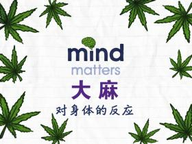 大麻对身体的影响 中小学生毒品预防教育