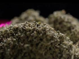 据估计合成毒品数量已经有800多种 合成大麻素占比不小